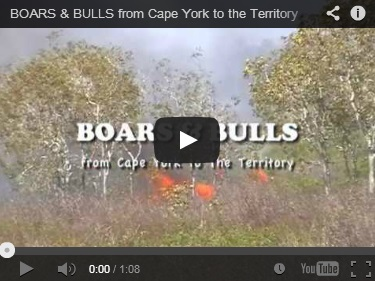 Boars and Bulls1